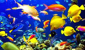 Dunia Ikan Hias - Ikan Hias Laut