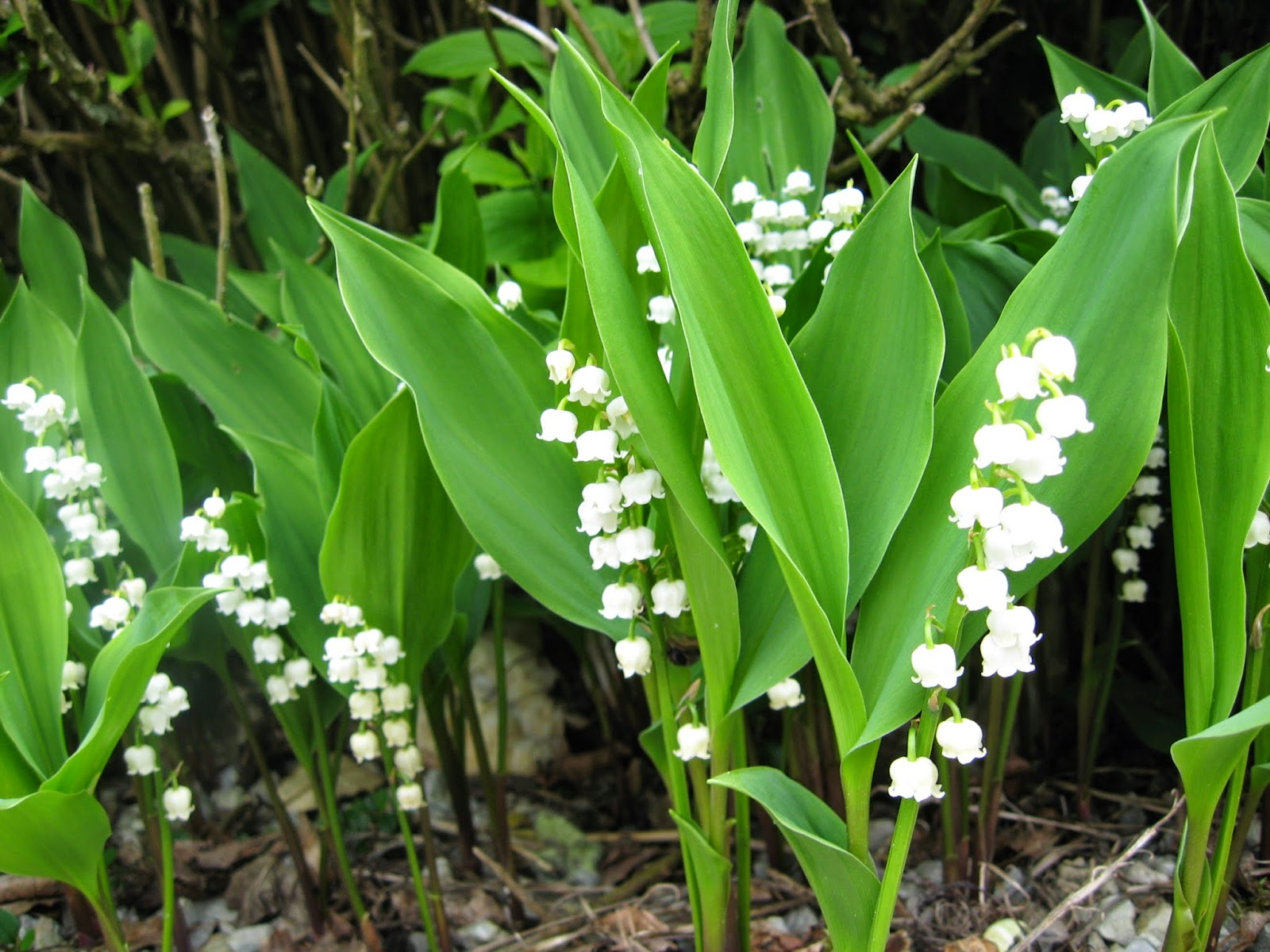 Horse Life And Love All About Poisonous Plants