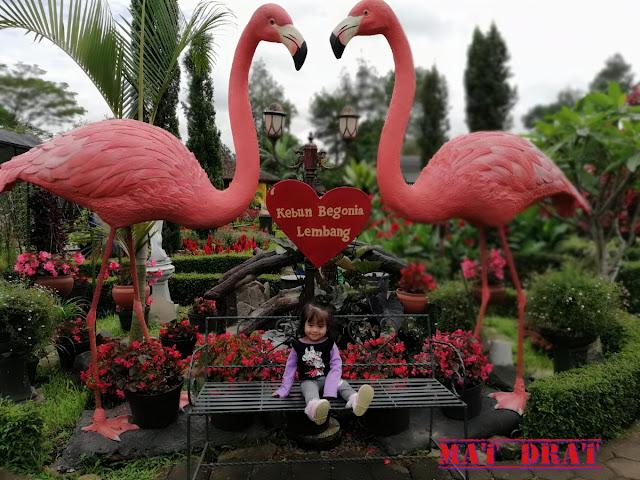 Percutian Melancong Tempat Menarik di Bandung Kebun Begonia Lembang