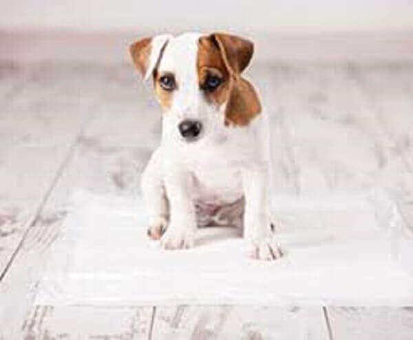 train a puppy potty