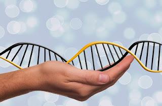 https://es.wikihow.com/construir-un-modelo-del-ADN-usando-materiales-comunes