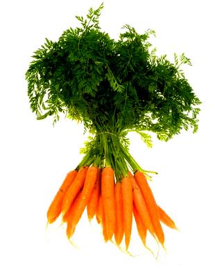 le potager familial bio comment cultiver les carottes au jardin potager bio. Black Bedroom Furniture Sets. Home Design Ideas