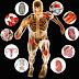 Libros fundamentales sobre Anatomia y Fisiología del Ejercicio