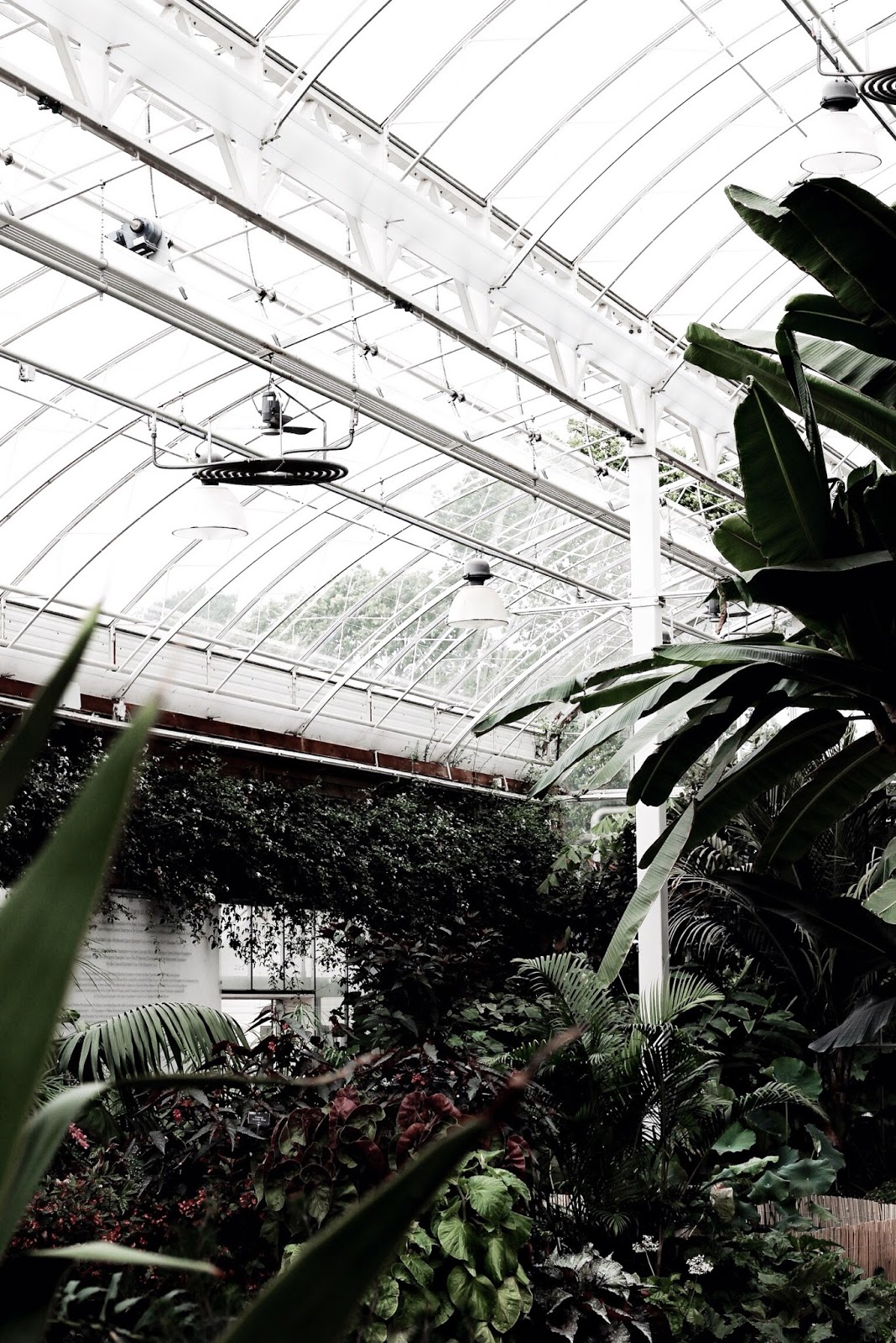 Glasshouse in the South East of England UK