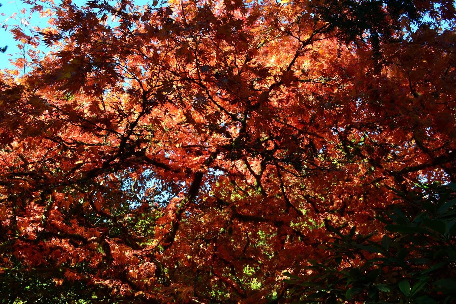 Linda Letters:: It\'s November! ...and Kubota Garden Part 2