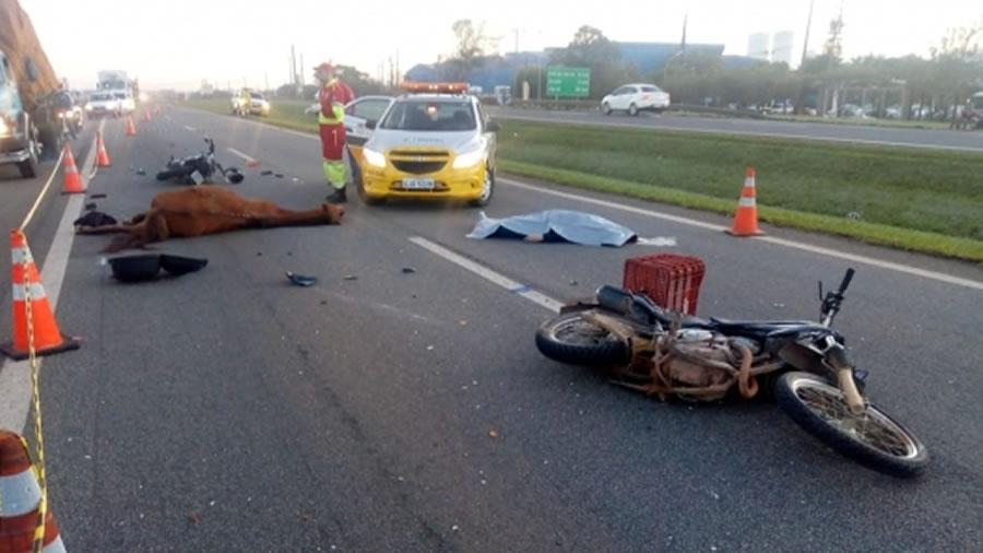 Motociclista morre após bater em cavalo e ser atropelado por caminhão na SP-340