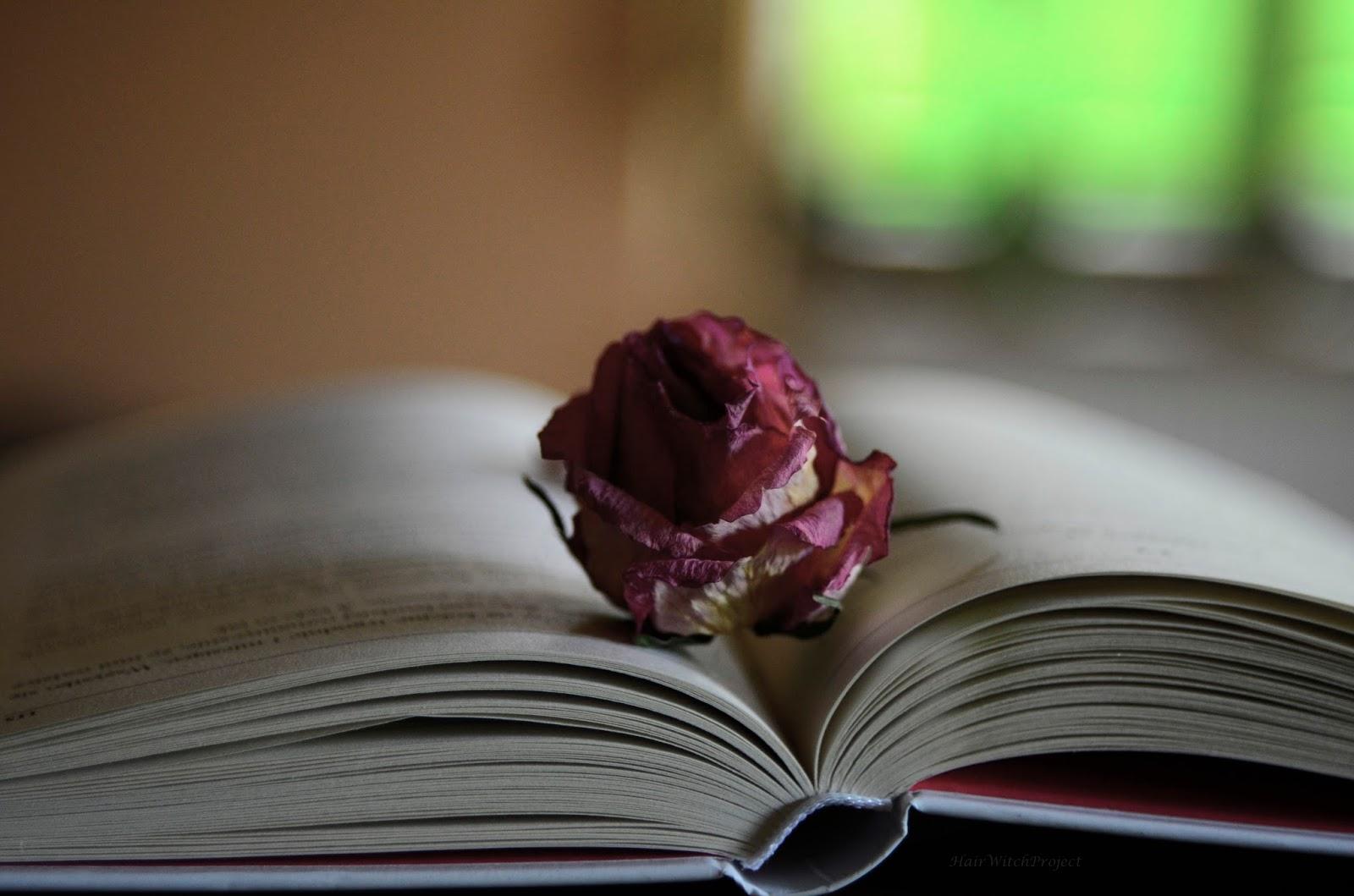 książka | #instaserial o miłości | recenzja | lifestyle | róża