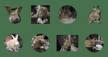 LINE Creators' Stickers - The oldest rabbit