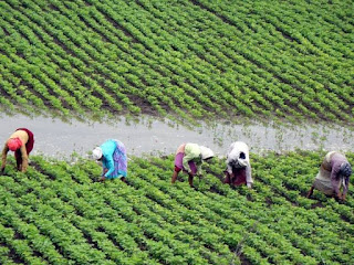 national-garden-mission-change-farmer-life-munger