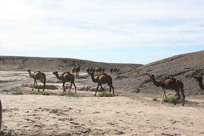 vuelos baratos,desierto marruecos,circuitos a marruecos,viajes a marruecos