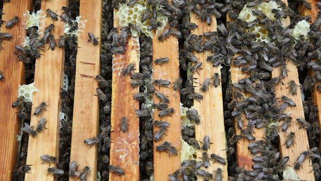 10 χειρισμοί για να γίνετε μεγάλοι μελισσοκόμοι