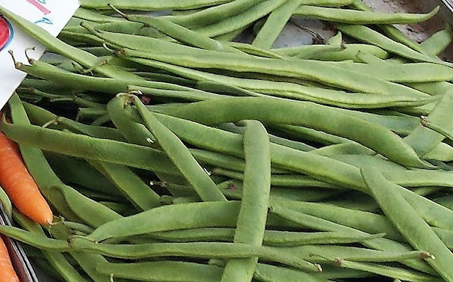A tray of freshly harvested green runner beans