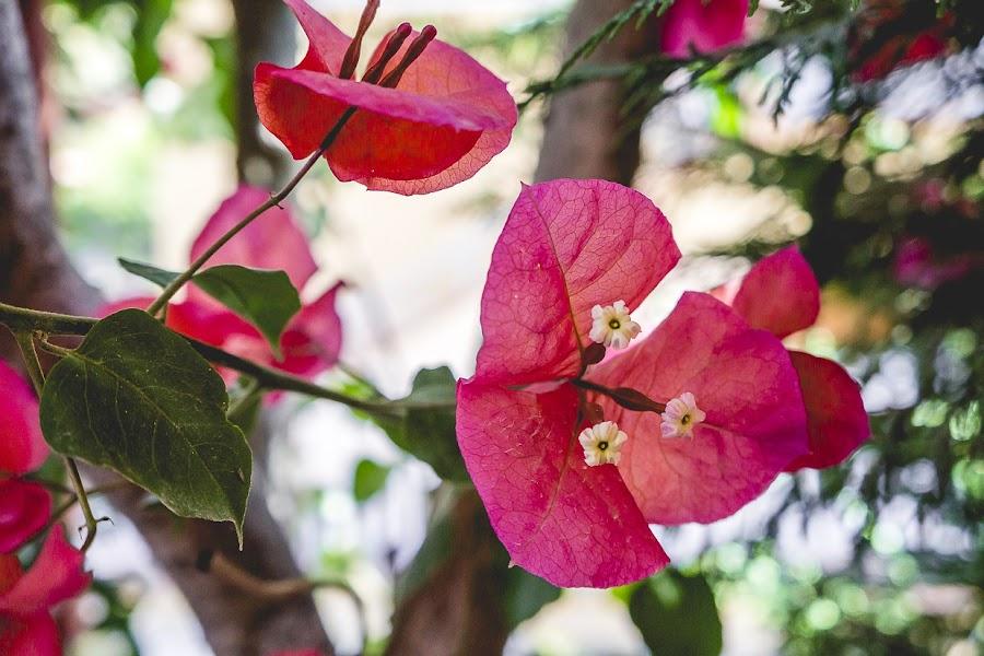 consejos-esenciales-para-fotografiar-las-flores