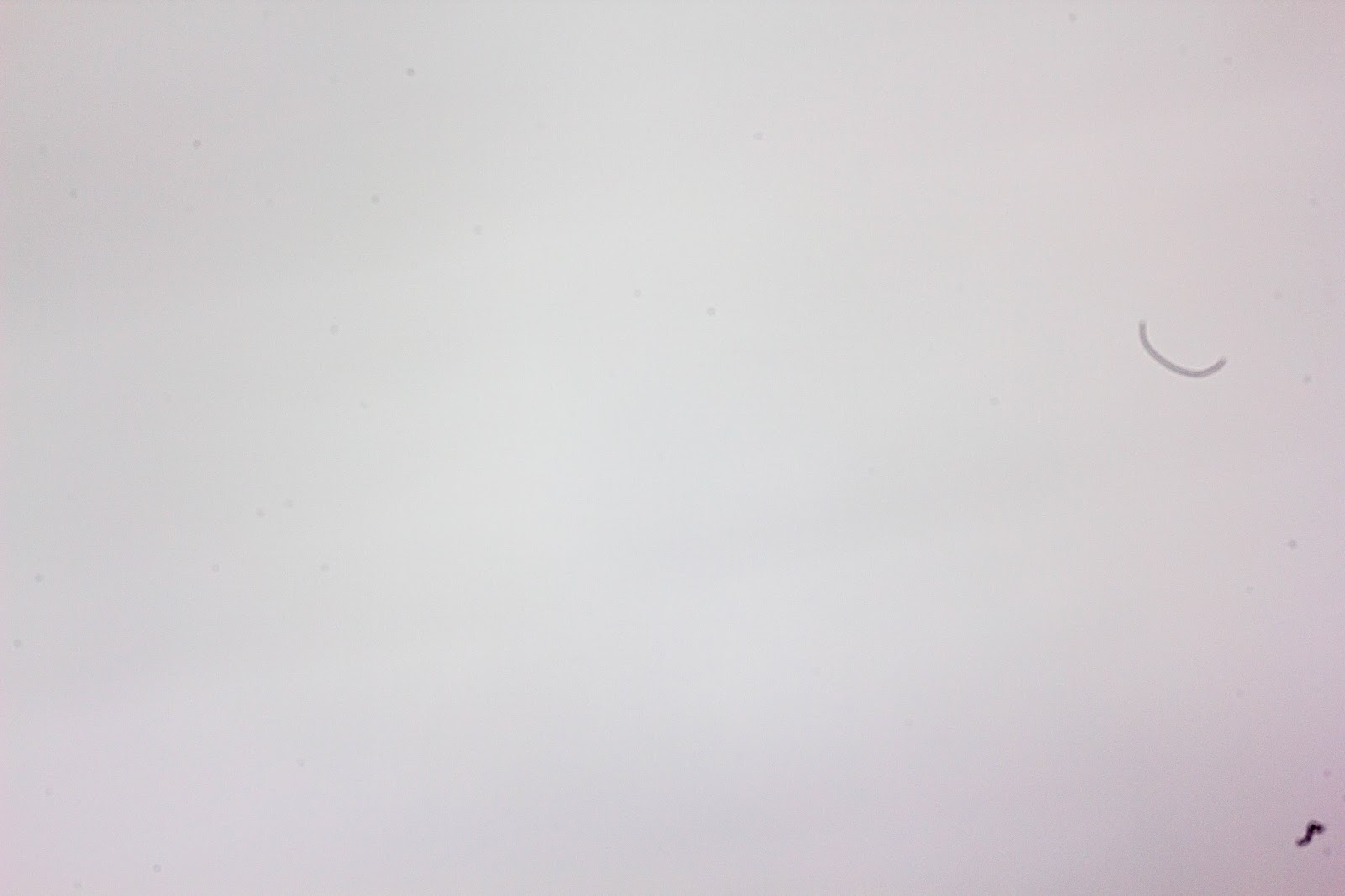 Sample picture which shows dust particle on camera sensor