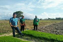 Metode Tanam Unik di Lampung Selatan