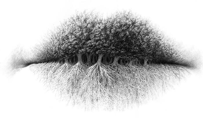 buzë, pemë apo rrënjë