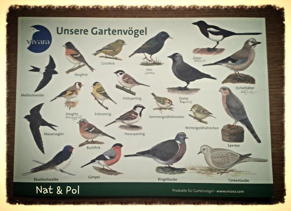 gatunki ptaków tablica