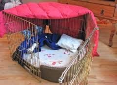 cães em gaiolas de recuperação