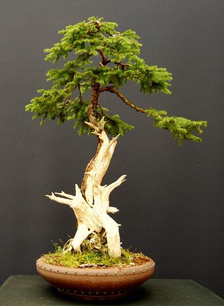 Jupps Bonsai Blog Totholz In Der Natur Und In Der Bonsaigestaltung