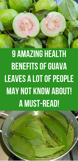 9 Amazing Health Benefits Of Guava Leaves A Lot Of People May Not Know About! A Must-Read!