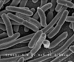 Pobladores del suelo: bacterias