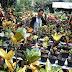 Panduan Lengkap Cara Perbanyak tanaman hias puring