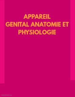 APPAREIL GÉNITAL ANATOMIE ET PHYSIOLOGIE