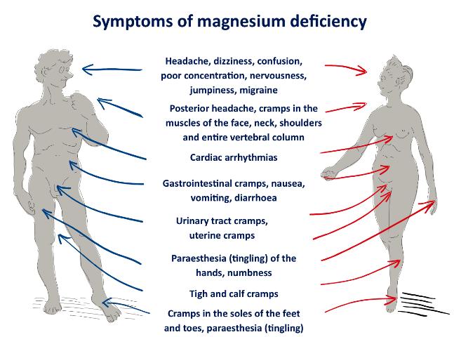 Magnesium bei Diabetes: Was bewirkt der Mineralstoff?