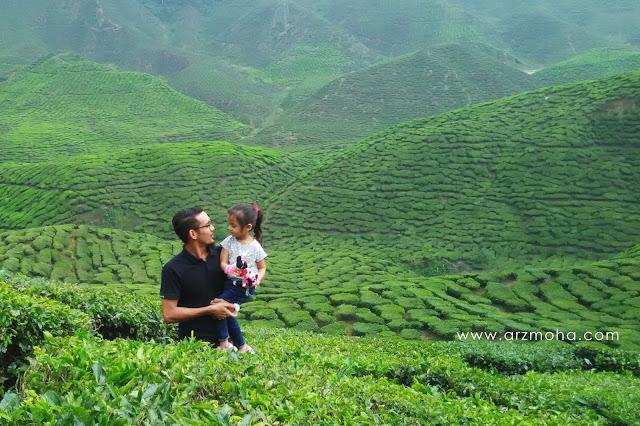 2 ladang teh cantik di cameron highlands, cameron highlands, ladang teh, bharat tea plantation, gambar permandangan cantik,