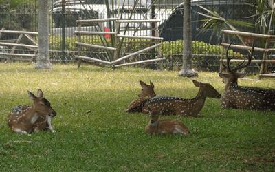 Taman Kemang Pratama Bekasi