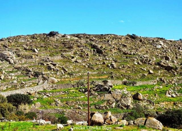 ledwie widoczne granitowe Portes, na pierwszym planie pasące się owieczki