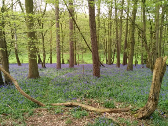 Photograph taken along the route of Walk 40: Ayot Greenway North Loop