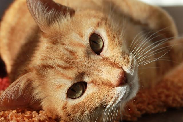 اجمل قطط