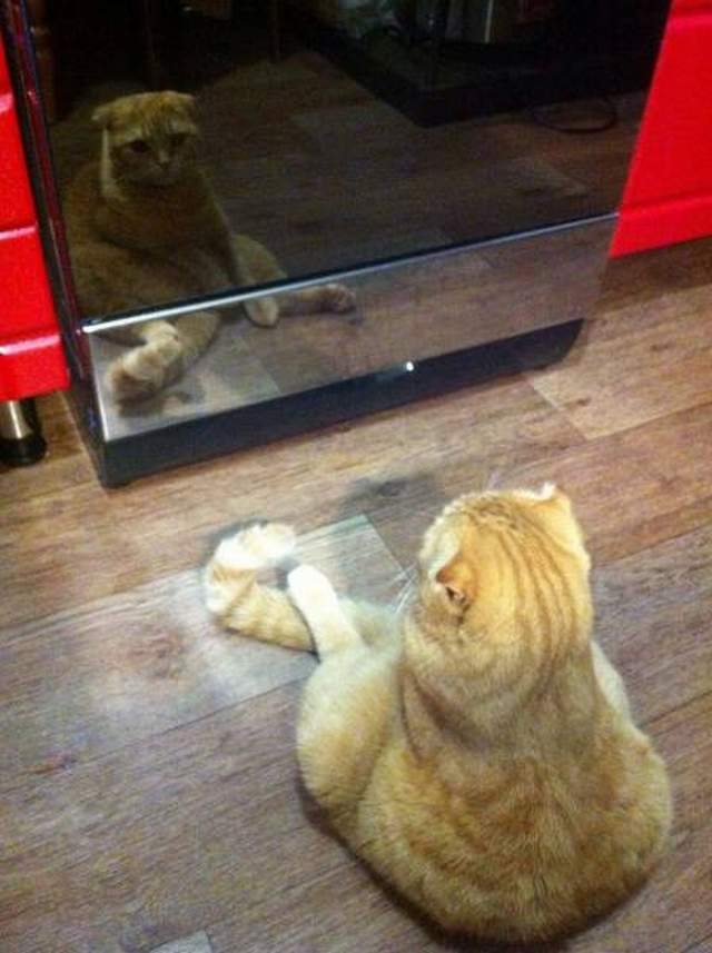 Funny cats - part 267, funny picture cat, cute cat, best funny cat picture