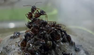 Fun Animals Wiki, Videos, Pictures, Stories: Worker Ants
