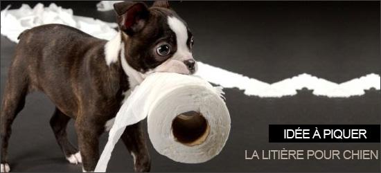 une liti re pour son chien woof mag 39 le blog des chiens heureux. Black Bedroom Furniture Sets. Home Design Ideas