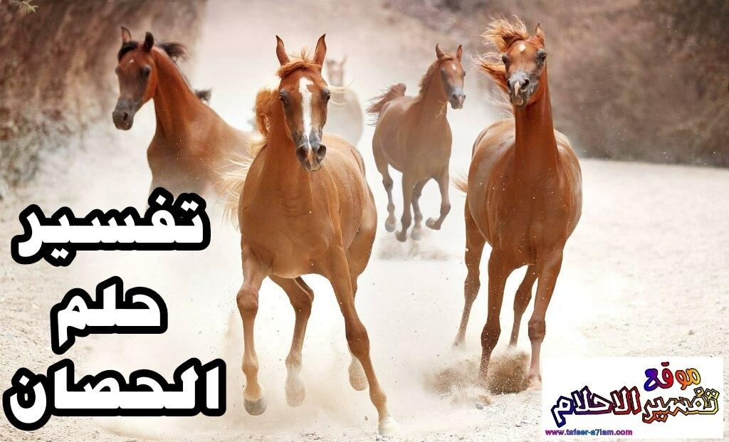تفسير ركوب الخيل في المنام ورؤية الحصان الاسود أو الابيض في المنام