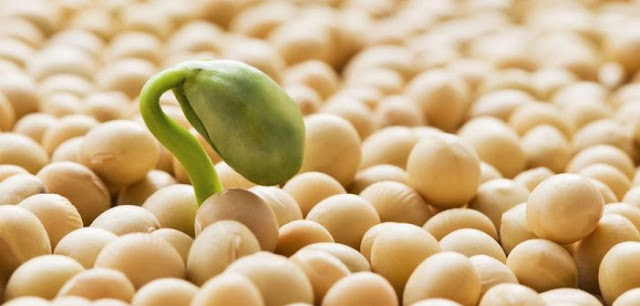nhập khẩu đậu tương