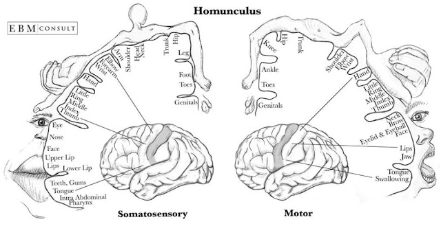 Quand la danse rencontre la géométrie... et l'homonculus !