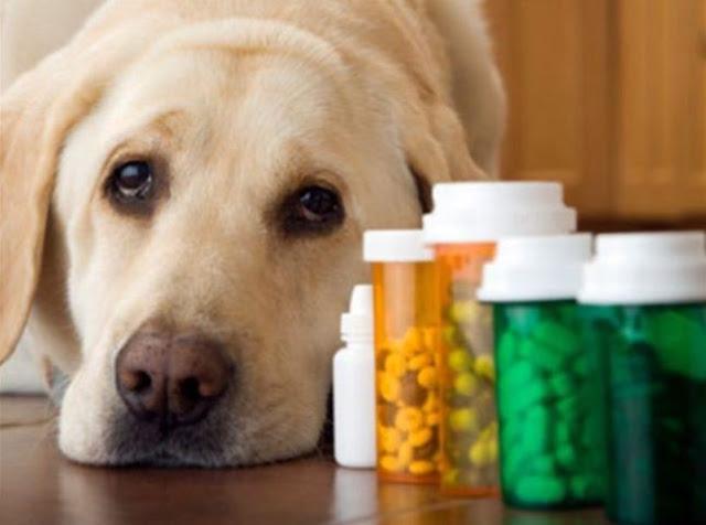 Conceitos em Farmacologia Veterinária