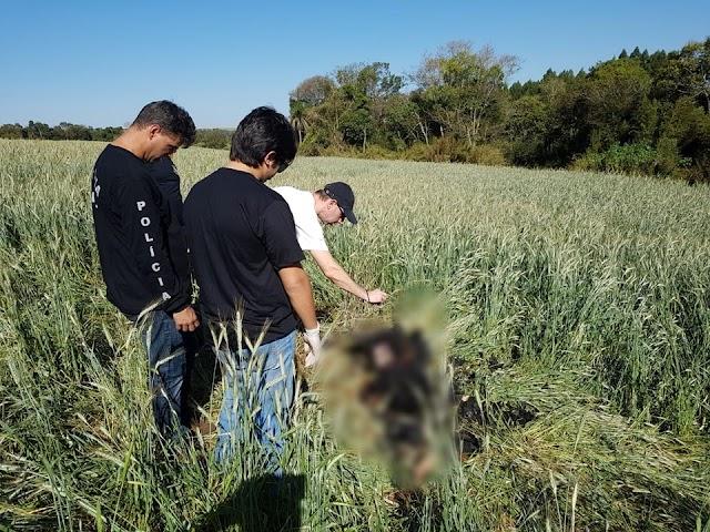 Corpo de homem carbonizado é encontrado por agricultor próximo a Usina Mourão