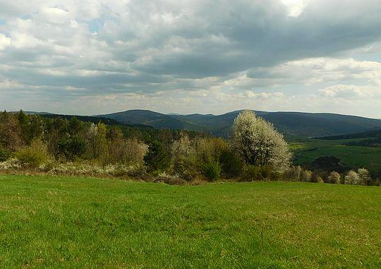 Drzewa ozdobione kwiatami. Na horyzoncie widać Bieszczady.