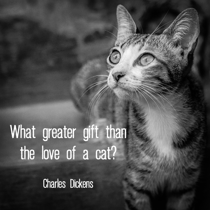 "Cat with quote ""What greater gift than the love of a cat?"" - Charles Dickens"
