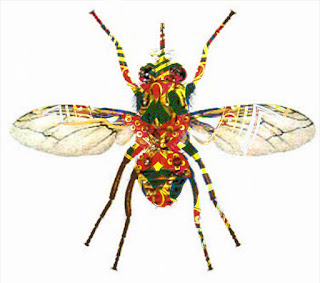 Fly African Fly