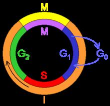 Ciclo celular y biologia
