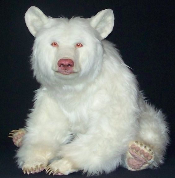 Bear | A-Z List of 125 Rare Albino Animals [Pics]