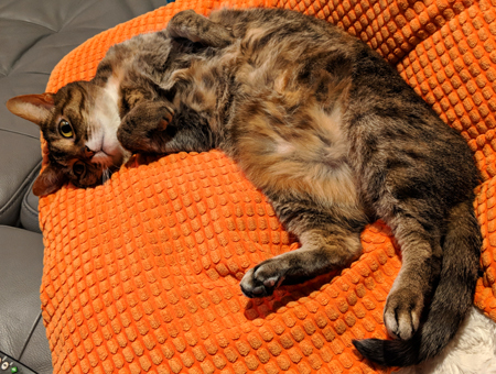 image of Sophie the Torbie Cat lying on an orange pillow on the sofa, with her belly up, looking adorbz