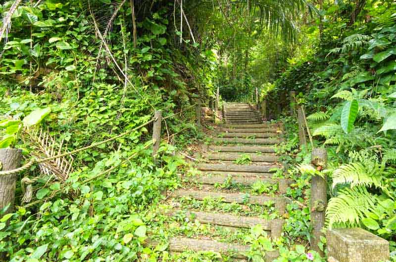 log staircase, trail,jungle