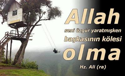 Allah lafzı, Hz. Ali, Özgür, köle, ağaç ev, salıncak, özlü sözler