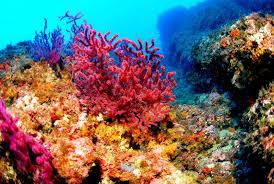 Los arrecifes mexicanos